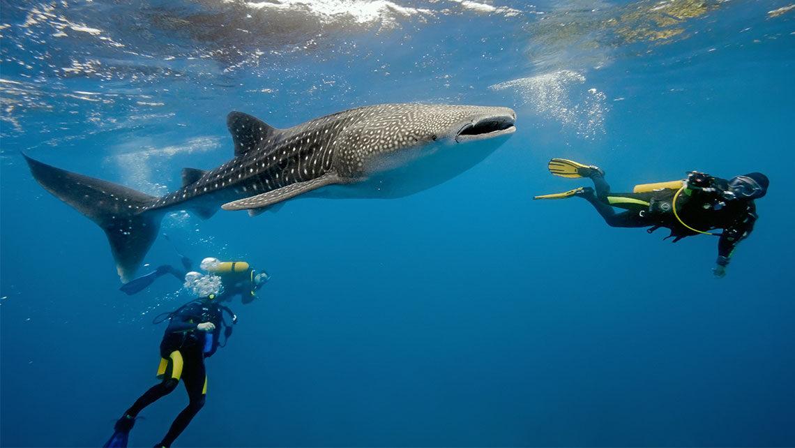 Nadar con tiburones en Cuba