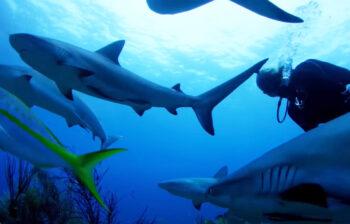 tiburones-cuba