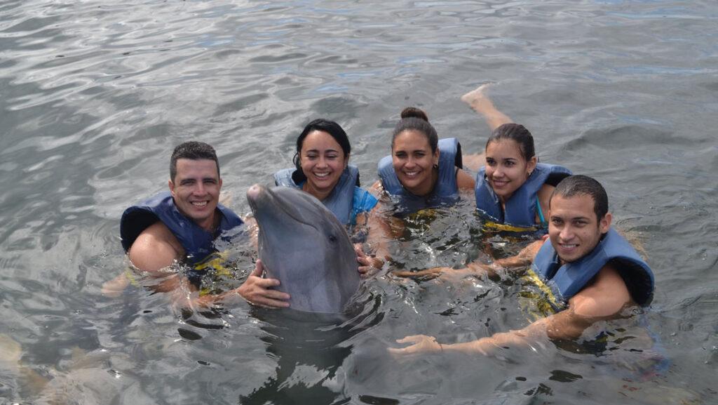 nadar con delfines en Cuba